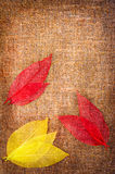 Grunge autumn background with leaves on canvas Royalty Free Stock Photos