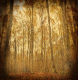 Grunge Autumn Beech Forest Royalty Free Stock Photography