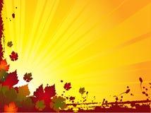 Grunge autumn leaf background Stock Image