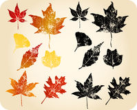 Grunge autumn leaves Stock Photo