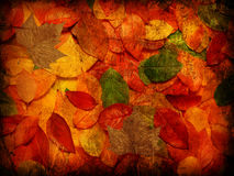 Grunge autumn leaves Royalty Free Stock Image