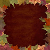 Grunge autumn leaves in frame background Royalty Free Stock Photos