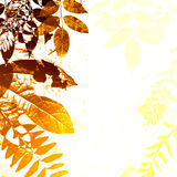 Grunge Autumn Leaves Silhouette vector illustration
