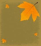 Grunge Autumnal Background Stock Photos