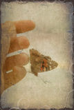 Grunge background. With plural butterfly Royalty Free Stock Photo