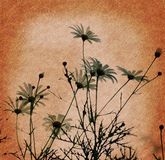 Grunge background. Back view of daisies against stock photography