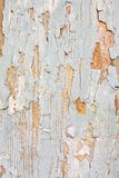 Grunge background. Image of wooden grunge background Royalty Free Stock Photos