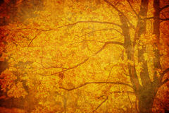 Grunge background with autumn leaves Royalty Free Stock Photo