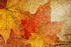 Grunge background with autumn leaves Royalty Free Stock Image