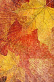 Grunge background with autumn leaves stock image