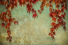 Grunge background with autumn leaves Stock Photography