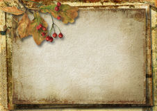 Grunge background with autumn leaves and rowan Stock Images