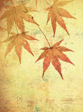 Grunge background with autumn leaves Royalty Free Stock Images