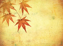 Grunge background with autumn leaves Stock Photos