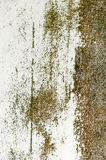 Grunge background brown texture wall rustic rust old organic mildew Stock Images