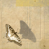 Grunge background and butterfly Stock Photos