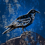 Grunge background with crow Royalty Free Stock Image