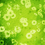 Grunge background with daisies Stock Image