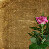 Grunge background for design with pink rose Royalty Free Stock Photos