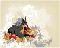 Grunge background with doberman pincher Stock Images