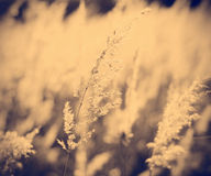 Grunge background of feather grass against sun Royalty Free Stock Photo
