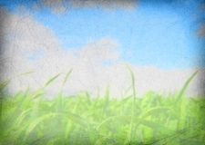 Grunge background of a field Stock Images