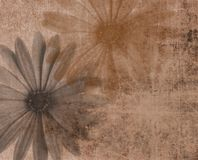 Grunge background with flower Royalty Free Stock Images