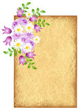 Grunge background with flowers. Grunge background with meadow flowers Stock Images