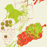 Grunge background with grapevine. Colorful ilustration Stock Image