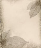 Grunge background with leaf Royalty Free Stock Photography