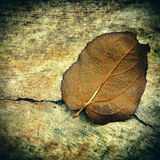 Grunge Background with a Leaf Stock Photo