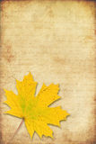 Grunge background with maple autumn leave Royalty Free Stock Image