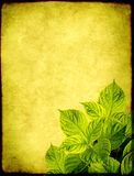 Grunge background with leaves of hydrangea Stock Images