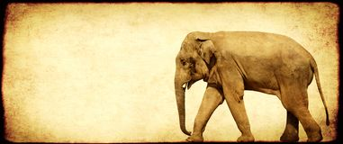 Grunge background with paper texture and walking elephant. Elephas maximus stock images