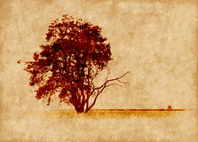 Grunge background with pine tree Royalty Free Stock Images