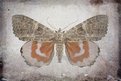 Grunge background. With red underwing butterfly Stock Photo