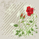 Grunge background with  roses. Grunge background with   abstract red roses and  butterfly Stock Image