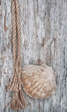 Grunge background with seashell and rope Royalty Free Stock Photo