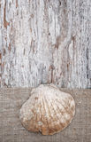 Grunge background with seashell on sackcloth Royalty Free Stock Image
