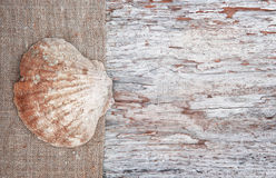 Grunge background with seashell on sackcloth Stock Photos