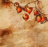 Grunge background with a sketch of orange physalis Royalty Free Stock Photo