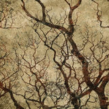 Grunge background with tree silhouettes Royalty Free Stock Photos