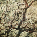 Grunge background with tree silhouettes Royalty Free Stock Photo