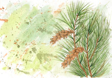 Grunge background with Weymouth pine Pinus strobus Stock Photography