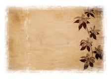 Grunge background with white border. Grunge floral background with white border stock illustration