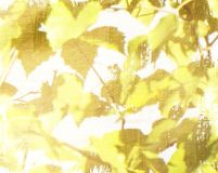 Grunge background with yellow and brown leaves royalty free stock photo