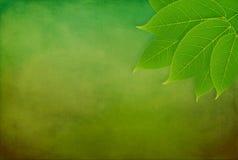 Grunge bakgrund med gröna leaves Royaltyfri Bild