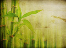 Grunge bamboo background Royalty Free Stock Photography