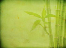 Grunge bamboo background Stock Photo