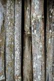 Grunge bambusa ściana z zielonobiałą foremką Fotografia Royalty Free